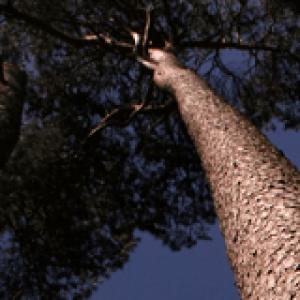 Good Timbers
