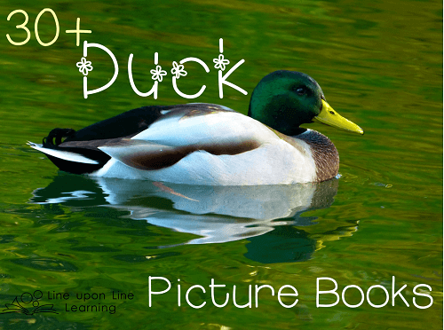 duck picture books