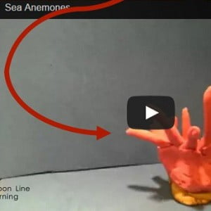 Teaching with Technology: Stop Motion Videos (Sea Anemones)
