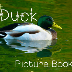 30+ Duck Picture Books