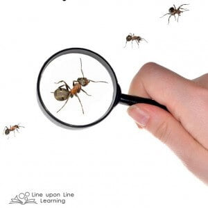 Persuading with Research: A Writing Lesson based on Hey, Little Ant