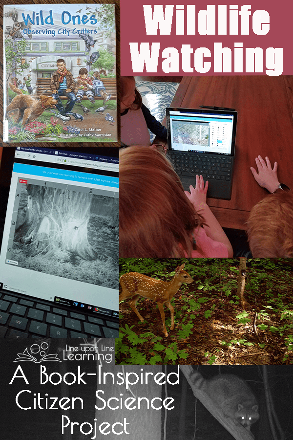 As we read a picture book about animals in the city and found a way to help scientists through a citizen science project, we have learned more about how animals interact in our city as well as which ones are most common.